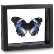 Blue Diadem Butterfly - Hypolimnas salmacis