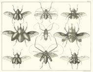 Albertus Seba Print - Vol. 4 Plate 90