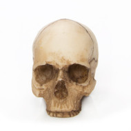 Miniature Human Skull