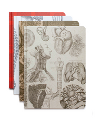 Anatomy Journals