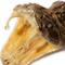 Rattlesnake Head - Close Up