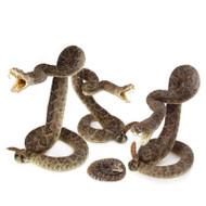 Western Diamondback Rattlesnake - thumbnail