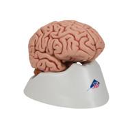 Classic Brain, 5-Part - Thumbnail