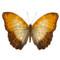 Common Yellow Glider - Cymothoe reinholti - Unframed