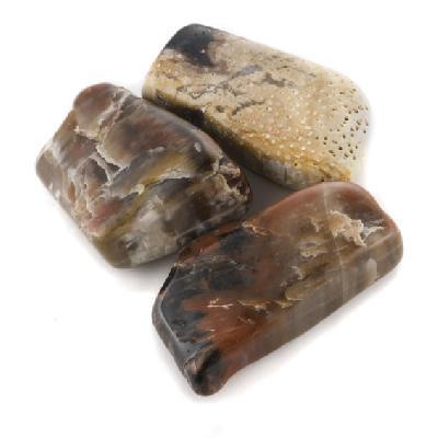 Small Tumbled Petrified Wood - Thumbnail