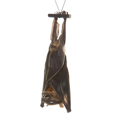 Freeze Dried Bat - Thumbnail