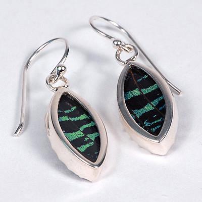 Butterfly Earrings - Urania ripheus