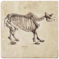 Marble Coaster - Rhinoceros