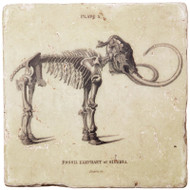 Marble Coaster - Mammoth