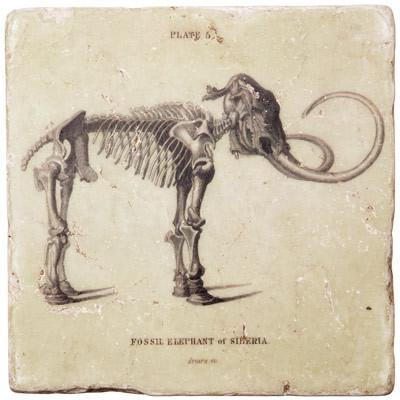 Marble Coaster - Mammoth