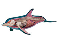 Anatomical Snap-Together Kit, Dolphin - transparent side