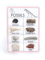 Mini Fossil Collection, 8pc. - Thumbnail