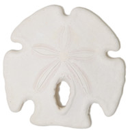 Florida Arrowhead Sand Dollar