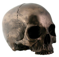 Bronze Skull Head W/O Jaw