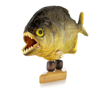 Man Eating Piranha Thumbnail