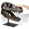 Replica T Rex Skull Small - In Hand