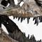Replica T Rex Skull Large - Close Up