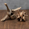 Fossil Bison Vertebrae - Large and Small