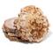 Petrified Wood Coasters - Thumbnail