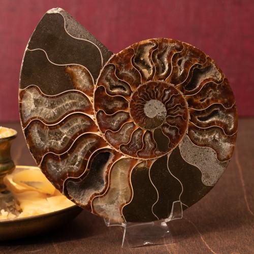Ammonite Half, Unique - Thumbnail