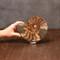 Ammonite Half, Unique - Scale