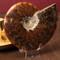Polished Whole Ammonite, Unique - Thumbnail