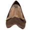 "Polished Megalodon Shark Tooth 5"" - Back"