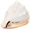 Pink Conch - Seashell - Side View One