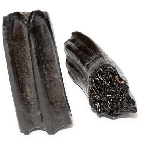 Fossil Horse Teeth - Thumbnail