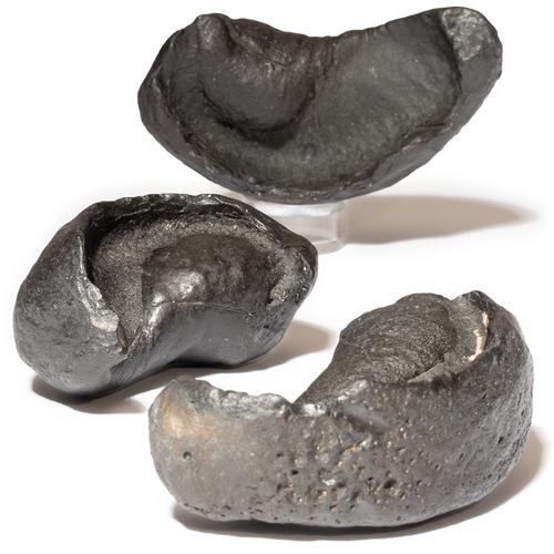 Fossil Whale Ear Bone - Thumbnail