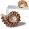 Ridged Ammonite - Douvilleiceras - Thumbnail