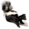 Skunk - Mephitis mephitis - Thumbnail