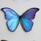 Giant Giant Blue Morpho Display - Single