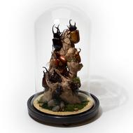 Rhino Beetle Dome - Thumbnail