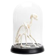 Cat Skeleton in Glass Dome