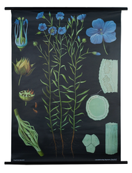 Flax Botanical Poster