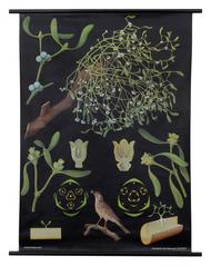 Mistletoe Botanical Poster