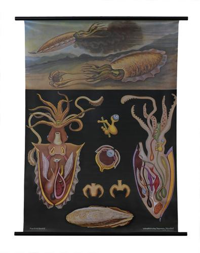 Cuttlefish Zoology Poster