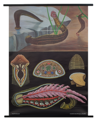 Leech Zoological Poster