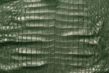 American Crocodile Skin Belly Matte Green 55/59 cm Grade 4