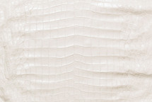 American Crocodile Skin Belly Matte White 55/59 cm Grade 4
