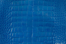 Alligator Skin Belly Glazed Cobalt 40/44 cm Grade 5