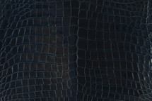 Alligator Skin Belly Glazed Midnight 40/44 cm Grade 5