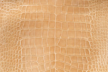 Nile Crocodile Skin Belly Glazed Buttercup 30/34 cm Grade 5