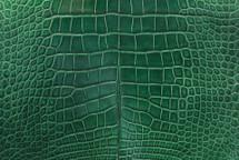 Nile Crocodile Skin Belly Millenium Pine 40/44 cm Grade 5
