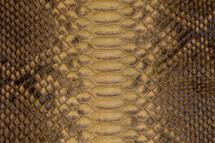 Python Skin Long Baikal Mimosa
