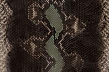 Python Skin Long Elephant Green