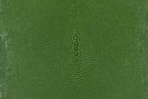 """Stingray Skin Long Shape Shagreen Light Green 4"""""""