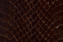 Whipsnake Skin Glazed Brown