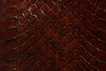 Whipsnake Skin Glazed Chocolate